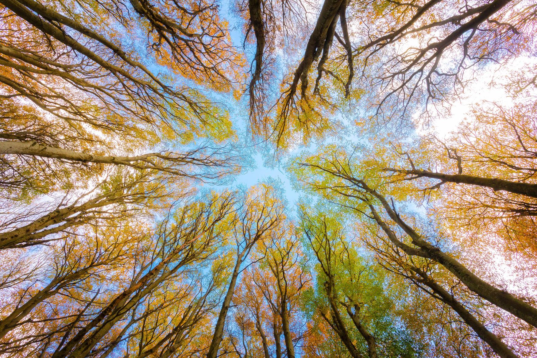 La communauté du génie, une alliée du développement durable